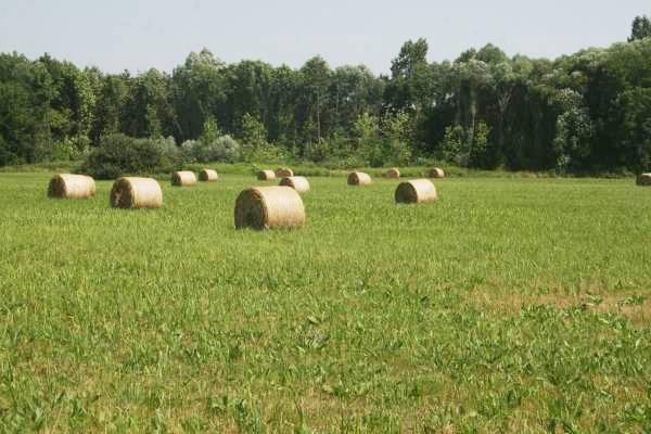A Kisalföld csapadékos vidékein dús füvű legelők és kaszálok vannak 81f9db86e5